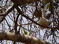 Lagenaria siceraria (5657026982).jpg