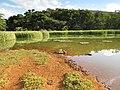 Lagoa - panoramio (13).jpg