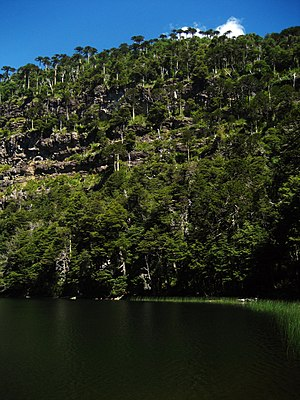 Tolhuaca National Park - Laguna Verde