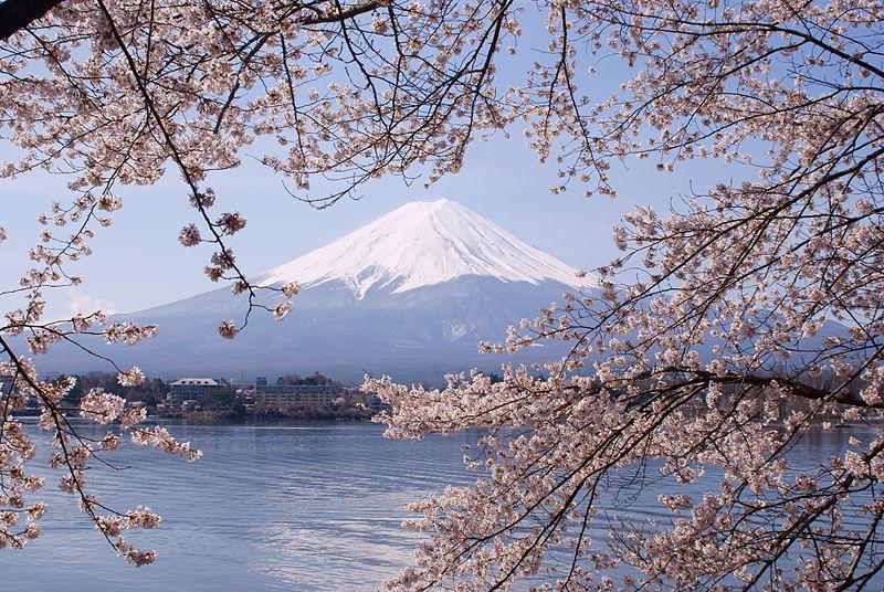 File:Lake Kawaguchiko Sakura Mount Fuji 1.JPG