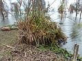 Lake Naivasha 07.JPG