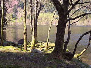 A lake surrounded by trees and some wood