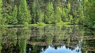 Lake on Sestroretsky swamp.jpg