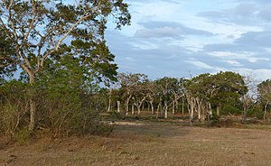 Landscape with elephant at Lunugamvehera National Park.JPG