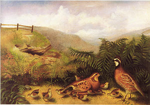 Rubens Peale - Landscape with quail cock hen and chickens by Rubens Peale, date unknown