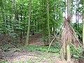 Landschaftsschutzgebiet Horstmanns Holz Melle -Im Wald- Datei 6.jpg