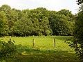 Landschaftsschutzgebiet Wäldchen bei Buer Melle Datei 32.jpg