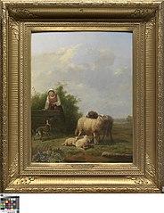 Landschap met schapen