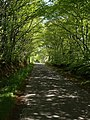 Lane past The Four Winds - geograph.org.uk - 428957.jpg