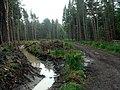 Langsett Woods Track - geograph.org.uk - 458396.jpg