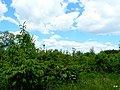 Las przy brzegu jeziora Sępoleńskiego. - panoramio.jpg