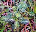 Leafflower.JPG