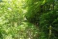 Leafy track, Coombe, near Landrake - geograph.org.uk - 179854.jpg
