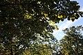Leaves 2010-10-02.JPG