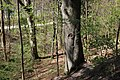 Leitenwälder der Isar 0615.jpg