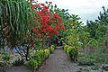 Lelepa Garden.jpg