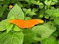 Lepi orange.jpg