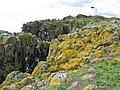Lichens at South Ness on the Isle of May - geograph.org.uk - 2058130.jpg