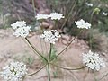 Little bug over a flower.jpg