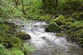 Llyfnant Valley rapids, June 2016.jpg
