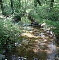 Loantaka Brook Reservation bikeway stream through woods with foliage.jpg