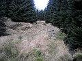 Loch Ard Forest - geograph.org.uk - 1058215.jpg
