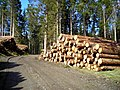 Logpile in Achray Forest - geograph.org.uk - 736382.jpg