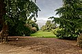 London - Kew Gardens - Ginkgo Biloba 1762 Kew's Oldest Tree - View West.jpg