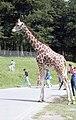 Longleat Safari Park, Warminster - panoramio (2).jpg