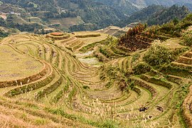 Longsheng Rice Terraces November 2017 014.jpg
