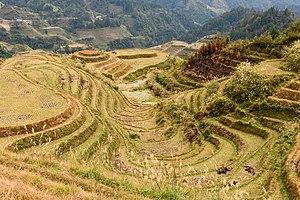 Longsheng Rice Terraces November 2017 014.jpg