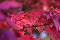 Loring Park Autumn (15176371175).jpg