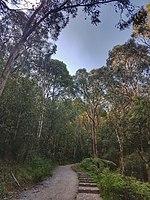 Eucalyptus Ecosystem Preserve