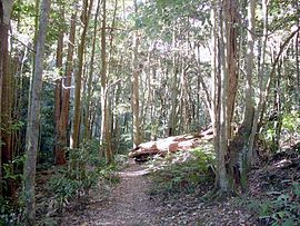 Macquarie Pass NP rainforest.JPG