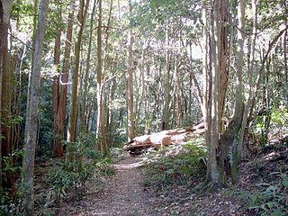 Macquarie Pass National Park Protected area in New South Wales, Australia