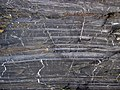 Magnetite banded iron formation (Soudan Iron-Formation, Neoarchean, ~2.69 Ga; Rt. 169 roadcut between Soudan & Robinson, Minnesota, USA) 21 (19035097072).jpg