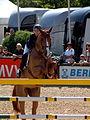 Maimarkt Mannheim 2014 - 51. Maimarkt-Turnier-092.JPG