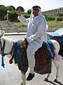 Man riding mule 2163 (508053945).jpg