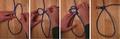 Manger knot.png