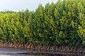 Mangrove swamp, Duta Beach, Paiton, Probolinggo, East Java, 2017-09-14 02.jpg