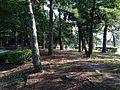 Matsushima Island in Ohori Park.JPG