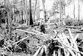 Mb-landclearing-1955.jpg