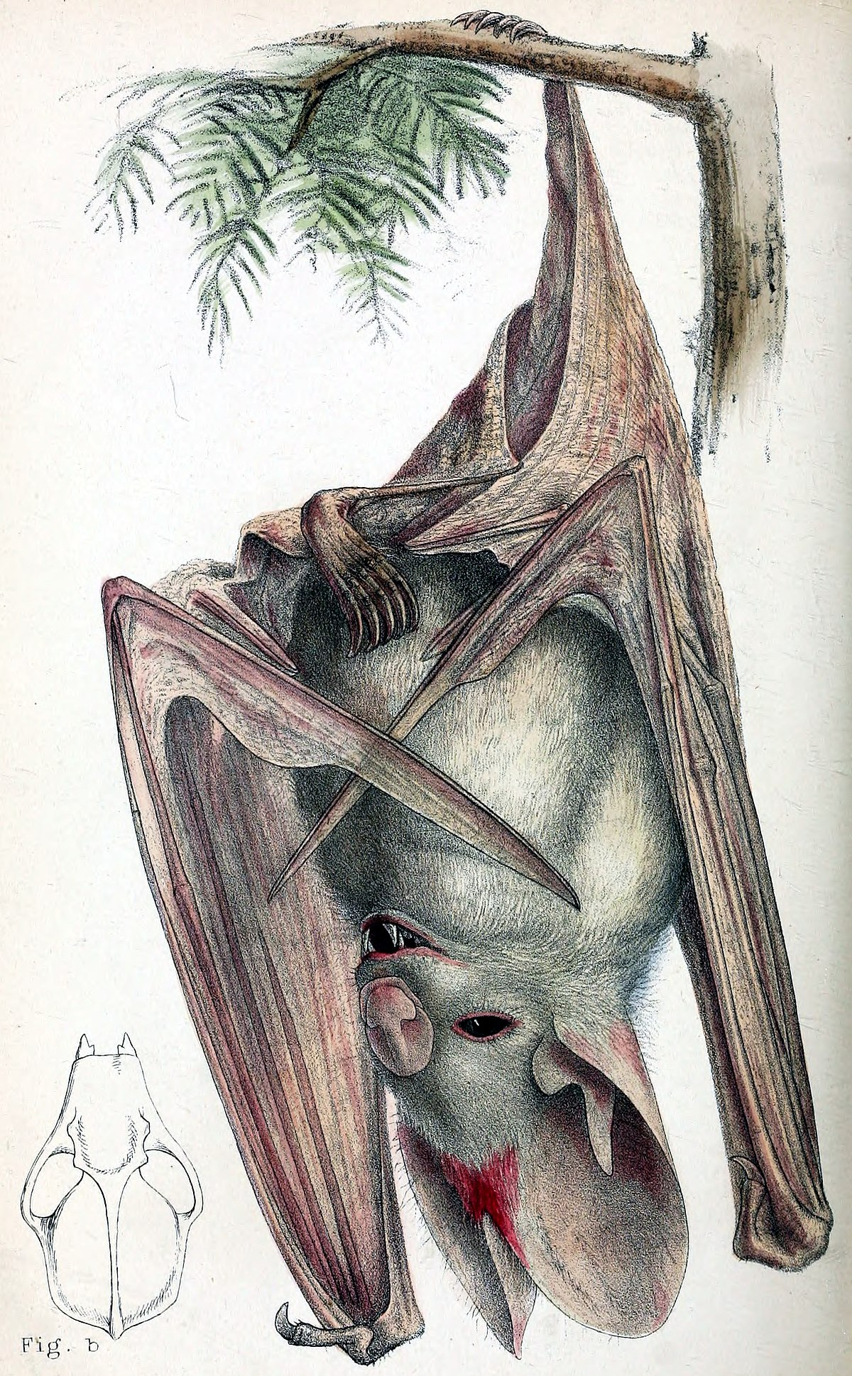 Ghost Bat Wikipedia