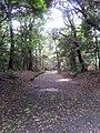 Meiji-jingu-pathway.jpg