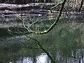 Meldon Pool - geograph.org.uk - 348587.jpg