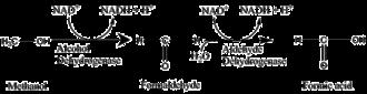 Toxication - Image: Methanol conversion