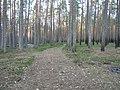 Mezs - panoramio (24).jpg