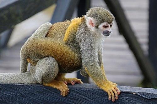 500px micos img 2128a