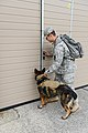 Military working dog and handler practice explosives detection 140729-A-BD610-012.jpg