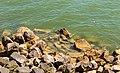 Monument afsluitdijk en omgeving 28-06-2019. (actm.) 26.jpg